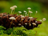 Under my Skin by mayne, Photography->Mushrooms gallery