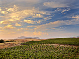 Vineyard skies by Surfcat, Photography->Landscape gallery