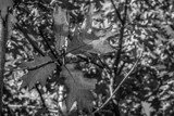 Fabulous Fall Foliage by Eubeen, contests->b/w challenge gallery
