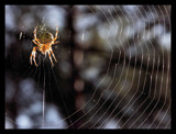 Sunbathing by ekowalska, photography->insects/spiders gallery