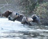 Urgency!! by garrettparkinson, photography->birds gallery