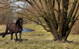 HDR Horse by Paul_Gerritsen, photography->animals gallery