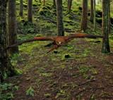 Swoop by biffobear, photography->birds gallery