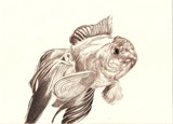 Golden Fish by Tochi, Illustrations->Traditional gallery