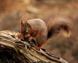 Who pinched me nuts...?. by biffobear, photography->animals gallery