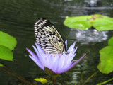 Resting by rhayes022104, Photography->Butterflies gallery