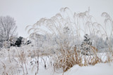 Winter Grass by Silvanus, photography->landscape gallery