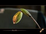 soft by kodo34, Photography->Macro gallery