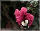 Butterfly Eleven by Jimbobedsel, Photography->Butterflies gallery
