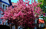 Spring On Our Road #2 by braces, Photography->Flowers gallery