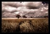 norfolk fields 2 by JQ, Photography->Landscape gallery