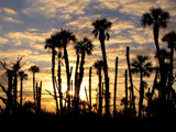 Palm Sunrise by CanoeGuru, Photography->Sunset/Rise gallery
