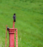 Robin's Perch by Pistos, photography->birds gallery