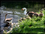 Come On In, The Water's Fine by Jimbobedsel, Photography->Birds gallery