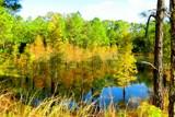 Mom's pond revisted. by GomekFlorida, photography->landscape gallery
