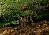 Bowlees bridge.. by biffobear, photography->waterfalls gallery