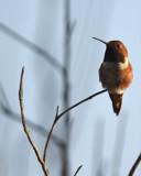 A Quiet Moment by garrettparkinson, photography->birds gallery