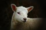 Awww by biffobear, photography->animals gallery