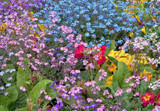 The Floral Zoo #1 by braces, Photography->Flowers gallery