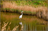 Fishing In Shallow Water by corngrowth, photography->birds gallery