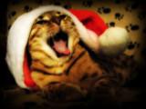 Santa's Helper by June, photography->pets gallery