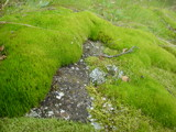 Moss up close by ggester, photography->general gallery