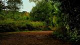 Derwent walk Three by biffobear, photography->landscape gallery