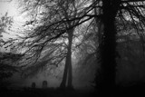 spooky graveyard by JQ, photography->landscape gallery