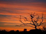 Sunset Silhouette by Paul_Gerritsen, Photography->Sunset/Rise gallery