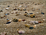 Seashells on a seashore by Mannie3, photography->shorelines gallery