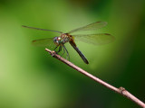 Dragonfly #3,876 by onespock, photography->insects/spiders gallery