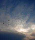 Egrets Soaring by clarkephotography, Photography->Skies gallery