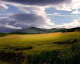 Barley by LANJOCKEY, Photography->Landscape gallery
