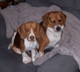 Millie and Lucy by mike4820, photography->pets gallery