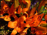 Orange Profusion by LynEve, Photography->Flowers gallery