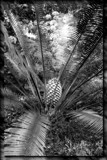 Palm by slushie, photography->nature gallery