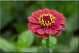 For Sunday by Ramad, photography->flowers gallery