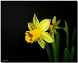 Clarity by ccmerino, Photography->Flowers gallery