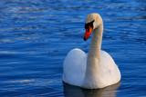 Elegance #2 by braces, Photography->Birds gallery