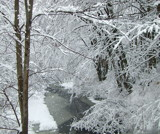 Winter Snow by ccmerino, Photography->Landscape gallery