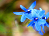 Sun Orchids by Samatar, Photography->Flowers gallery