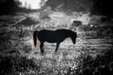 Out to Pasture by Eubeen, photography->animals gallery