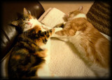 Contented by LynEve, photography->pets gallery