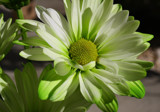 Festivity by jerseygurl, photography->flowers gallery