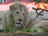 Pride 2 by raiden747, Photography->Animals gallery