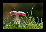 wet & wild 2 by kodo34, Photography->Mushrooms gallery