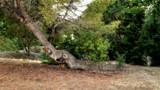 Slug Tree by Flmngseabass, photography->nature gallery