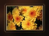 Autumn - October 5, 2008 - Blooms by nmsmith, Photography->Flowers gallery