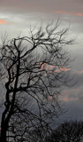 The Witch's Tree At Sunset by braces, photography->sunset/rise gallery