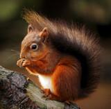 He's still around by biffobear, photography->animals gallery